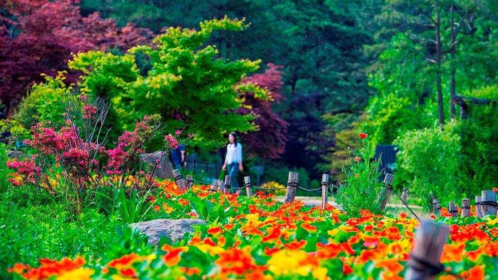 sandeulsori-arboretum-in-namyangju
