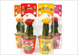 Completely Packaged Cacti Products